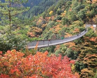 厳選!秋の極彩色に染まる熊本の紅葉絶景5選