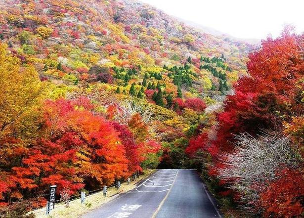 くじゅう連山 / 山肌に敷き詰められたような紅葉