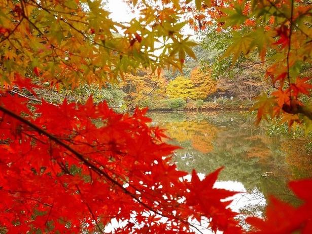 白馬渓 / 水面に映る紅葉を楽しむ