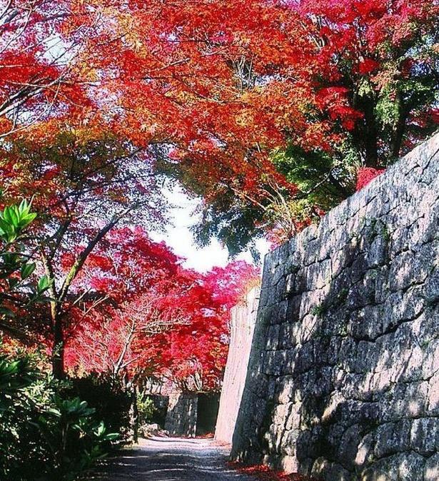 竹田(岡城阯) / 日本百名山に囲まれた城下町の秋景色