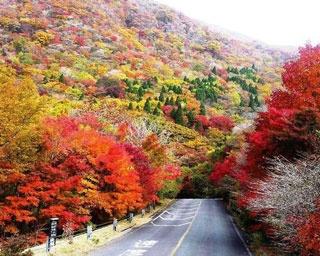 厳選!秋の極彩色に染まる大分の紅葉絶景5選