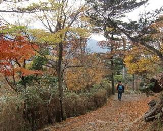 厳選!秋の極彩色に染まる宮崎の紅葉絶景4選