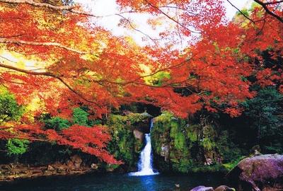 観音滝公園 / 真っ赤に色づく公園を散策しよう