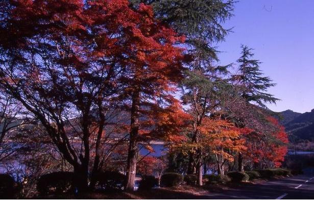 藺牟田池県立自然公園 / 広大な景色を味わう夕暮れ