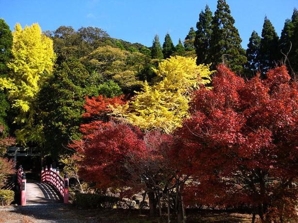 冠岳 / あざやかな赤や黄色が印象的