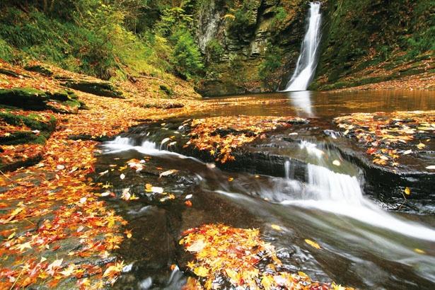 落葉した紅葉が滝に流される様も風流だ/赤目四十八滝