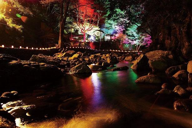 【写真を見る】七色に変化するあかりが滝と紅葉を照らしだし、なんとも幻想的/赤目四十八滝