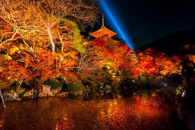 【写真を見る】放生池周辺から三重塔を見上げると、池に映える紅葉と塔の朱色のコントラストが楽しめる