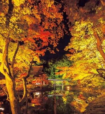 【写真を見る】幽玄なムードが漂い、ロマンチック!中門東側から臥龍池を見ると、ライトアップされた紅葉や臥龍廊が池に映り込む、幻想的な光景が広がる