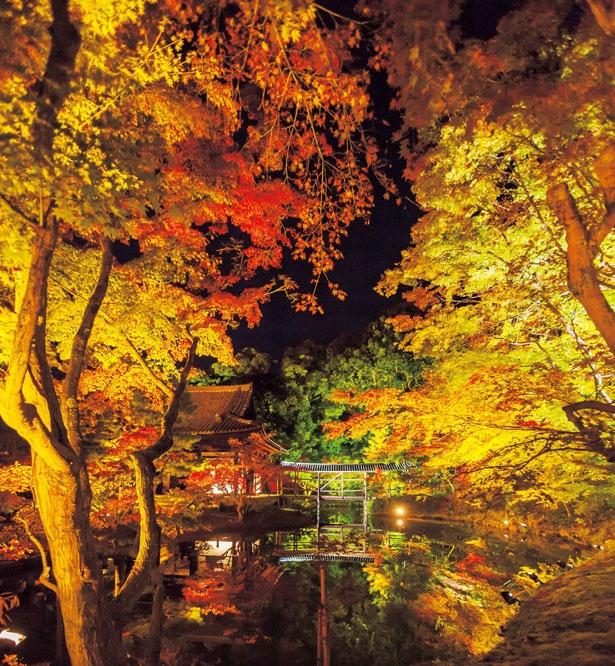 幽玄なムードが漂い、ロマンチック!中門東側から臥龍池を見ると、ライトアップされた紅葉や臥龍廊が池に映り込む、幻想的な光景が広がる