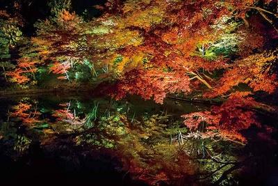 臥龍池は、ライトアップされた紅葉を水面が映し出す絶景ポイント。時間を忘れて眺めてしまうほどの美しさ