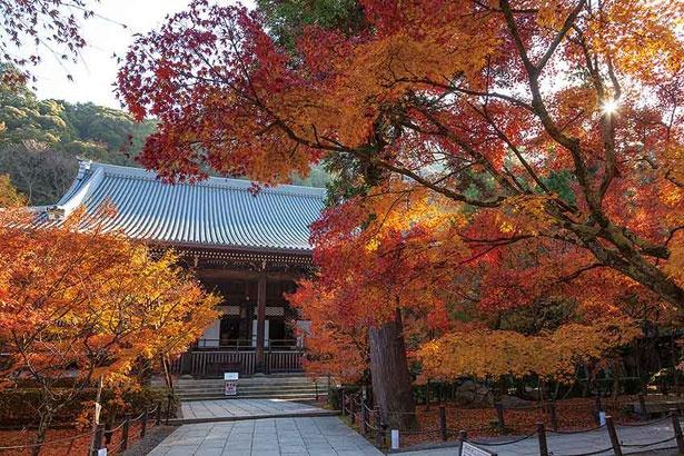 永観堂(京都市左京区)