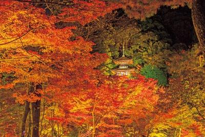 【写真を見る】ライトアップによって浮かび上がる多宝塔と紅葉は、幻想的な雰囲気!夜間に多宝塔は拝観できないので、遠くから眺めよう
