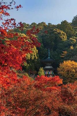 昼は勇壮な多宝塔と紅葉、木々の深い緑が織り成す自然美を楽しめる