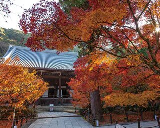 永観堂で一番大きな建築物で、境内のほぼ中央に位置する御影堂が色とりどりの紅葉で彩られる