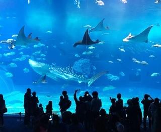 「旅好きが選ぶ!日本の水族館ランキング2018」が決定!1位は「沖縄美ら海水族館」、トップ10には九州からもランクイン!