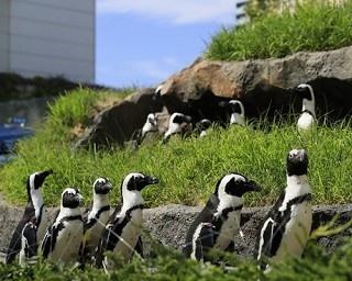 水族館プロデューサーの中村元氏と、サンシャイン水族館の「天空のペンギン」展示