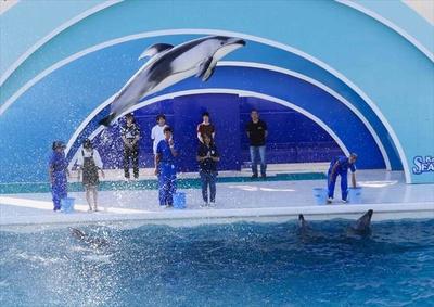 自分のサインでイルカがジャンプする瞬間に感動!