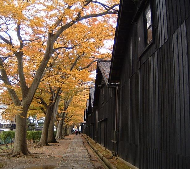 【写真を見る】ケヤキ並木が美しい山居倉庫。一度は見たい風景