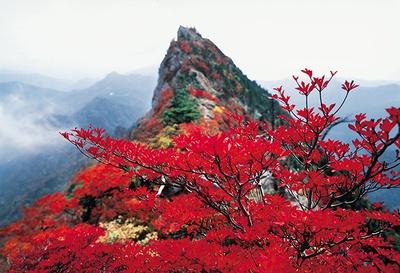 毎年真っ赤に染まる石鎚山