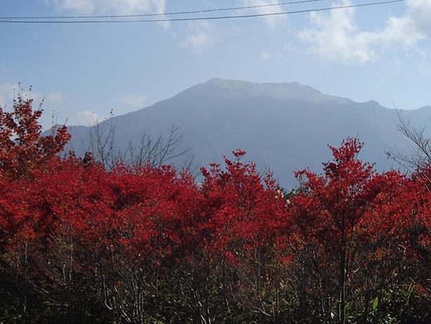 【写真を見る】山肌と紅葉のコントラストが美しい