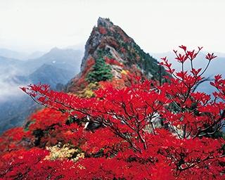 赤く染まる西条市の守り神・愛媛県の石鎚山で「石鎚もみじまつり」開催