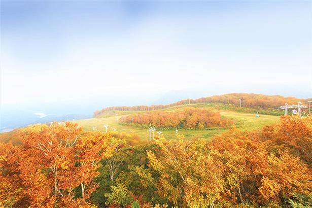 美しく広がる紅葉を見に行こう!