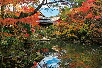 昼間は書院内への立入ができない代わりに、2つの庭を散策できる。歩きながら、枯山水と池泉庭園という京都らしい風景をめでよう