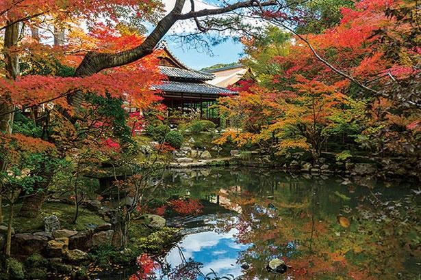 昼間は書院内への立入ができない代わりに、2つの庭を散策できる。歩きながら、枯山水と池泉庭園という京都らしい風景を愛でよう