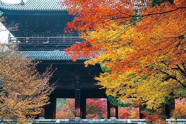 昼間は天授庵だけでなく、南禅寺の紅葉も美しい。楼上へも上がれる三門や、別名「虎の子渡し」の庭と呼ばれる名庭・方丈庭園(各600円)などがおすすめ