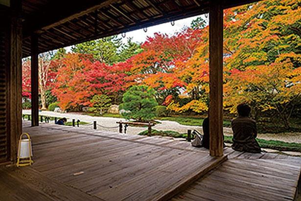 白砂と緑の苔、そして紅葉とのコントラストが見事な本堂東庭。ひし形の畳石も特徴的だ