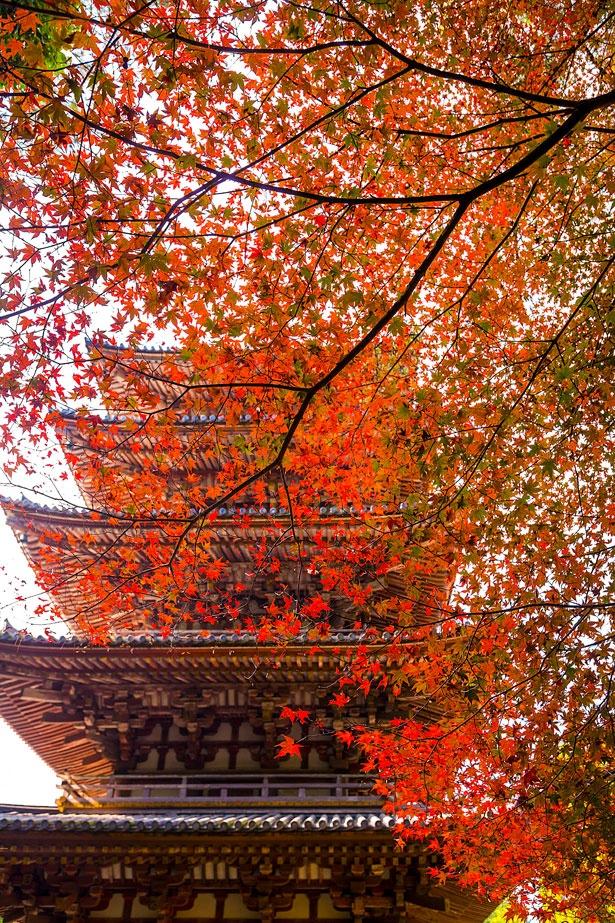 京都府下で最も古い木造建築物の五重塔。伽藍見学は昼間がおすすめ