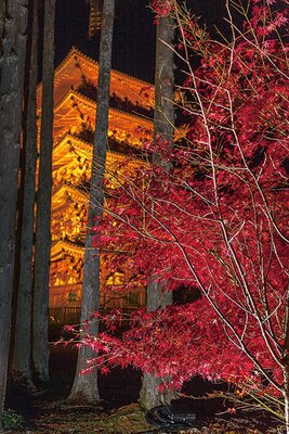 闇夜に浮かぶ五重塔と紅葉のコラボレーションも美しい。高さ約38mの国宝に紅葉が彩りを添える