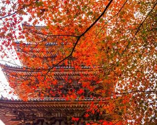 世界文化遺産の境内が紅葉に染まる!京都・醍醐寺で秋景色を堪能