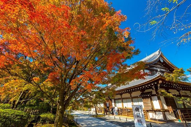 天気が良い日には青空と紅葉、青龍殿が織りなす美しい光景も。青龍殿の中には国宝の青不動(複製)が祀られている