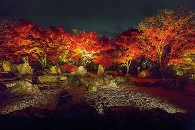 散策を楽しめる回遊式庭園内でもあでやかな紅葉のライトアップを楽しめる
