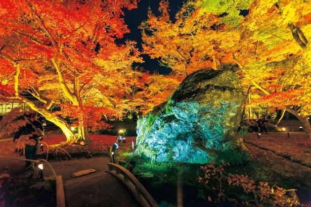 【写真を見る】幻想的なライトアップにうっとり!庭園内に横たわる巨岩・碧岩と紅葉が融合した、趣ある光景が広がる