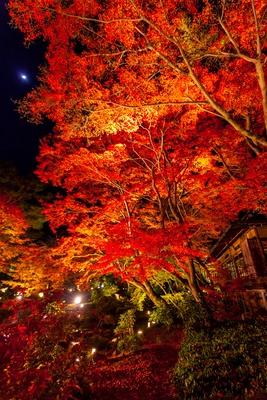 名庭の紅葉をライトが鮮やかに照らし出す。五感をフルに使いながら散策しよう