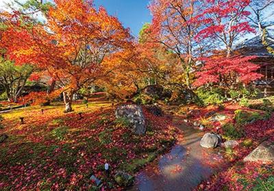 緑の苔と燃えるように赤い木々のコントラストが絶景。庭園中をおおう紅葉のじゅうたんが楽しめる、 散り際に訪れるのもおすすめ
