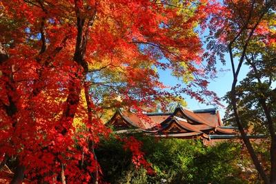 国宝の御社殿周辺で鑑賞する、昼の紅葉も見事。もみじ苑のライトアップと合わせて堪能したい