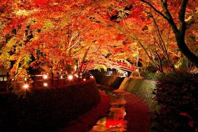 【写真を見る】まさに絶景!もみじ苑にかかる鶯橋の朱色と見事な紅葉、紙屋川を流れる散りモミジが光に照らされる