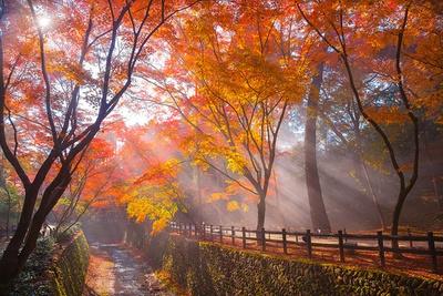 昼の紙屋川沿いは水面の輝きや木漏れ日などが、紅葉の木々を優しく包み込む