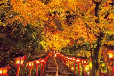 【写真を見る】本宮に続く参道石段のライトアップは必見!二の鳥居から本宮境内まで続く87段の石段と、それに沿って立ち並ぶ春日灯籠は、貴船神社を代表する風景