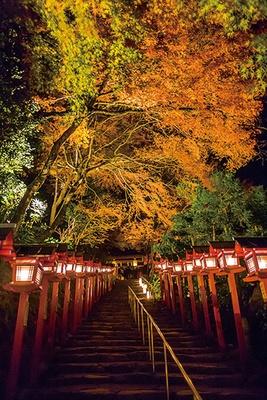 ピーク時の紅葉も見事だが、赤や黄、緑のコントラストが楽しめる11月中旬や、下旬の散り際の紅葉も見逃せない