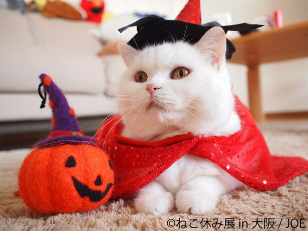 ハロウィン猫に会える!