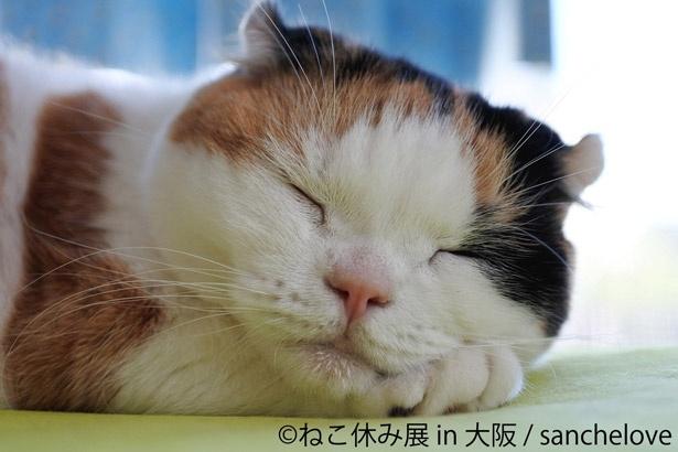 心を和ませてくれる猫たち