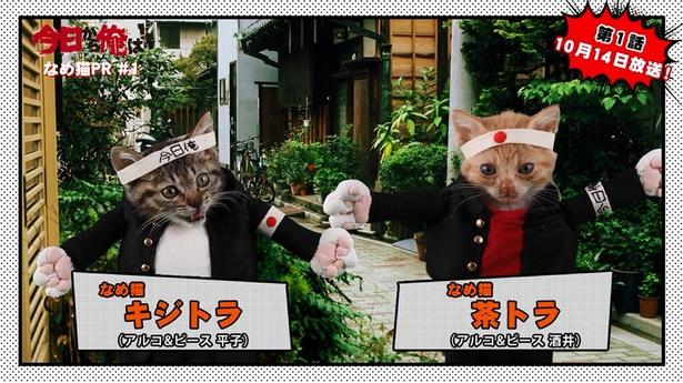 """「今日から俺は!!」のPR動画を担当する""""なめ猫""""『なめんなよ!』"""