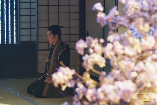 薩摩藩邸の庭に咲く桜