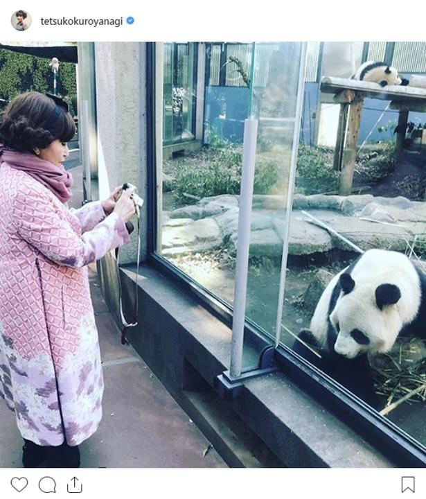 【写真を見る】パンダのものまねをむちゃぶりした黒柳徹子は日本パンダ保護協会名誉会長を務める