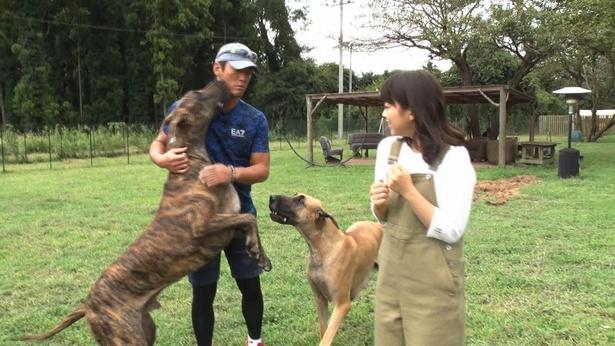 愛犬家らしく大型犬にもひるまず心を通わせる長嶋一茂